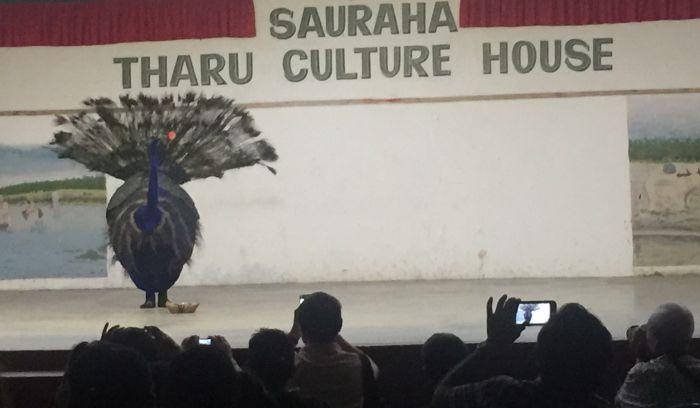 peacock dance- Jungle safari adventure