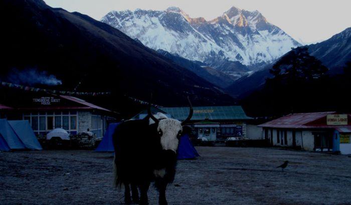 Yak and Yeti trail of Nepal