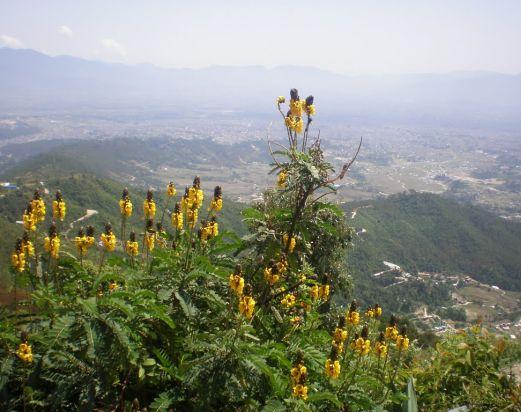 Nagarjun Hill Day tour