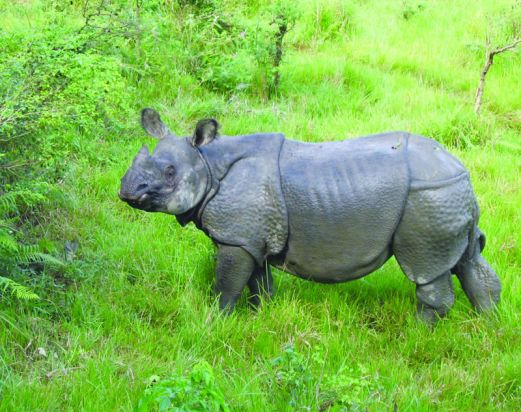 Nepal Wildlife Safari Tour